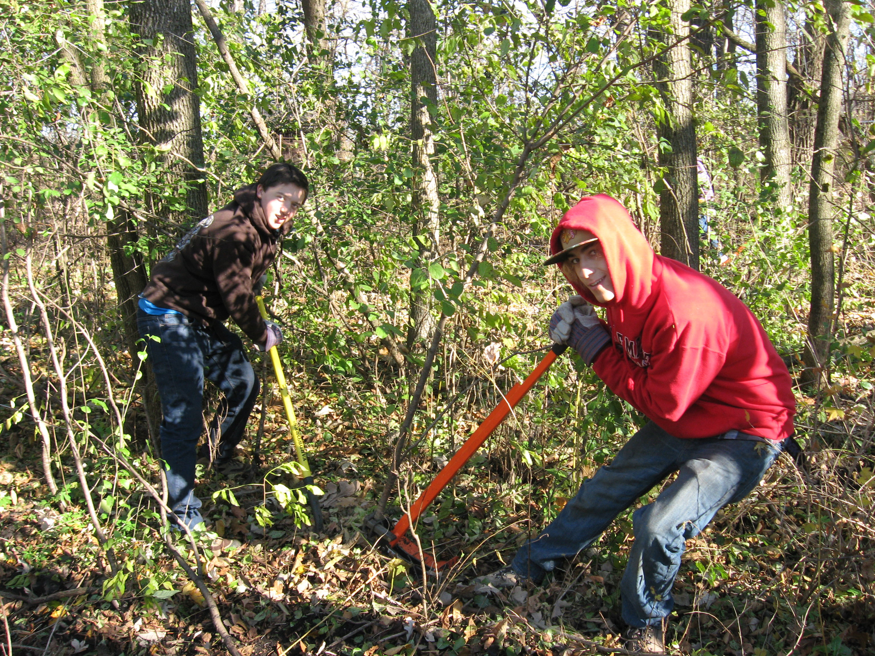 removing-buckthorn